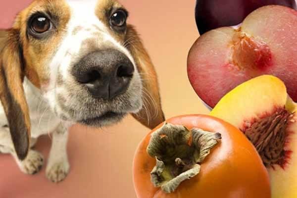 Peaches & Plums